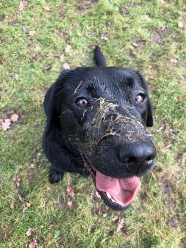 Drinking out of muddy puddles - oh no.