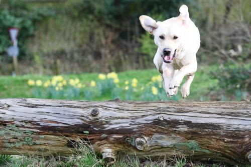 He loved jumping this log.
