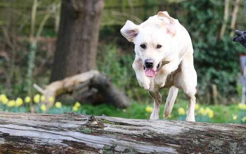 Jump logs, jump dogs; it's all the same.