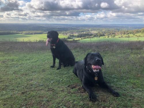 Overlooking Maidstone with her running partner Bella.