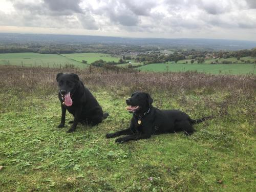 Tracey and Bella on the North Downs.