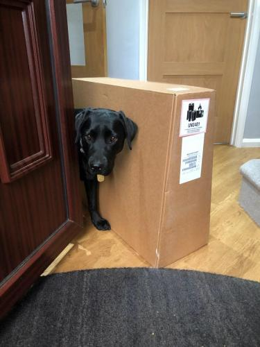 Just making sure I was getting the packages out of the house.