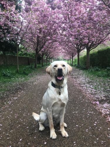 He loved the blossoms.